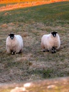 Ireland Mar 2010 096
